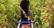 Ley de Agricultura