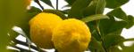 Limón-mojado-760x300