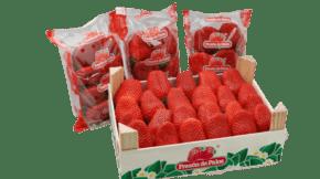 fresas