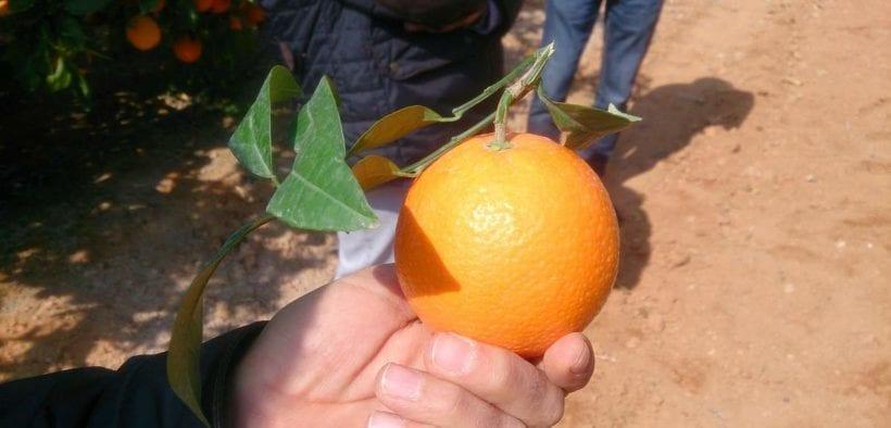 Naranja Cambria