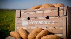 Patatas Primadonna