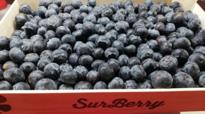 Surberry